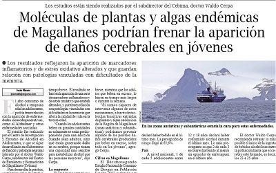 Algas de Magallanes podrían frenar aparición de daños cerebrales en jóvenes