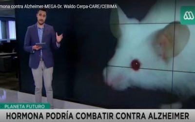 Comentario de Dr. Waldo Cerpa acerca de la relación entre la irisina y el Alzheimer en Meganoticias